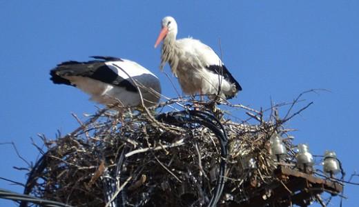 Las cigüeñas ya tienen 'casa' en Puente de Vallecas