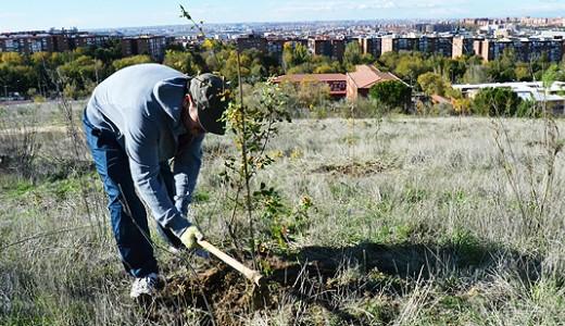 El Cerro Almodóvar tendrá nuevos árboles en febrero